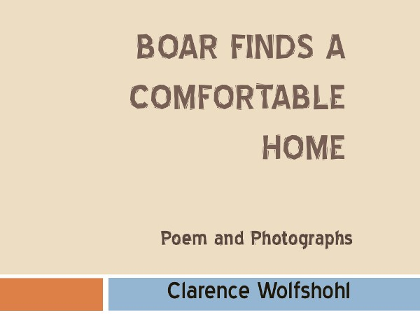 Boar Finds a Comfortable Home